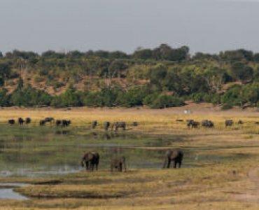 פילים בבוטסואנה