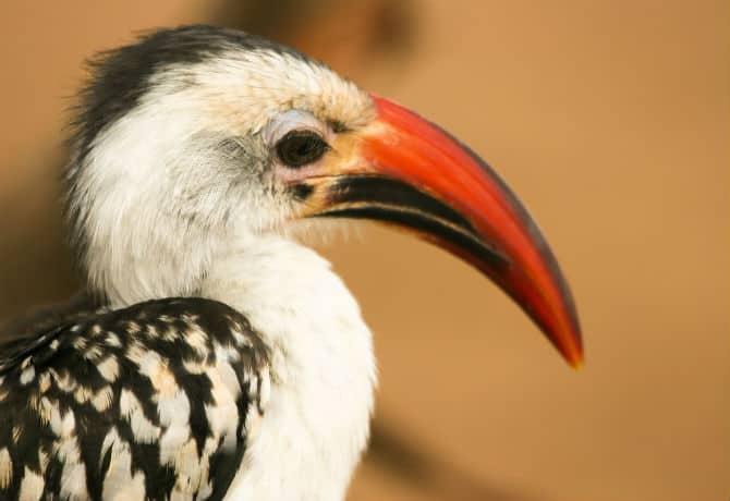 ציפור בשמורת הסמבורו