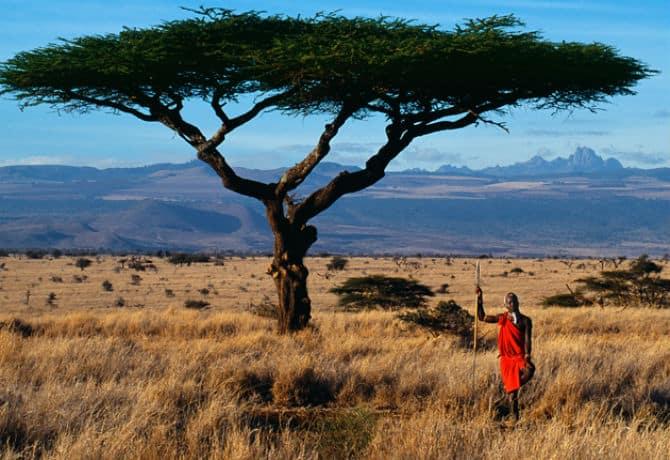 מסאי בשמורה בקניה