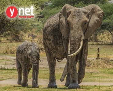פילים לא שוכחים