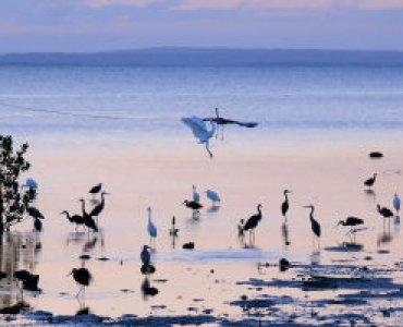 ציפורים בשמורת טבע במוזמביק