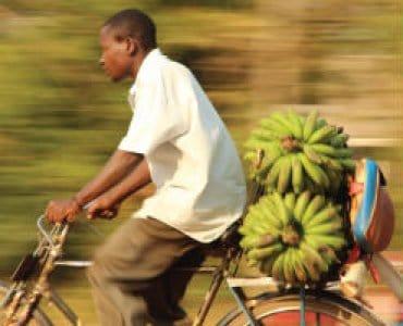 גבר מסיעה חבילת בננות על אופניו