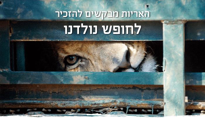 האריות מבקשים להזכיר