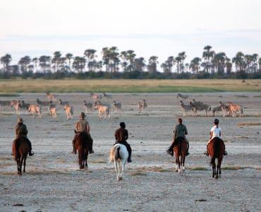 רוכבים על סוסים בספארי וצופים בזברות
