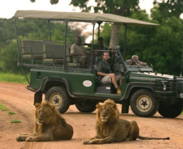 אריות ליד ג'יפ