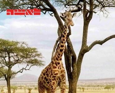 מסע לאפריקה