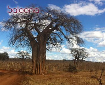 יומן מסע באפריקה