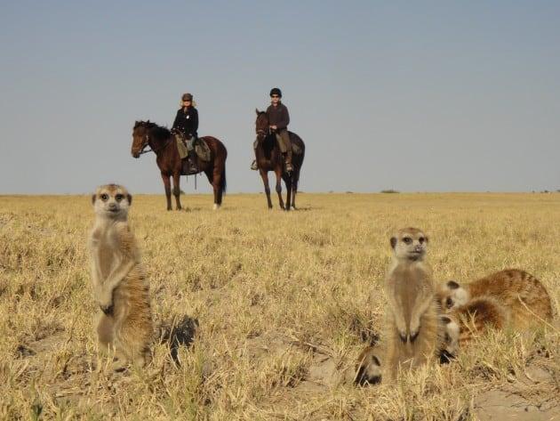 ספארי סוסים בוצואנה