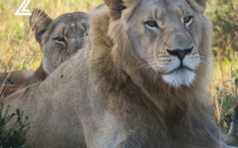 אריות בערוץ 2
