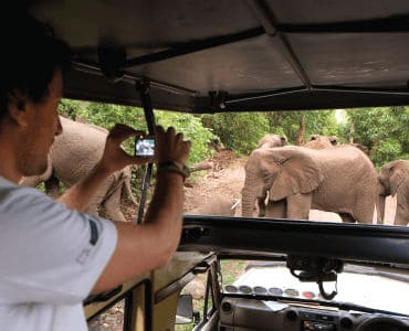 גבר מצלם פיל בזמן נסיעה בג'יפ